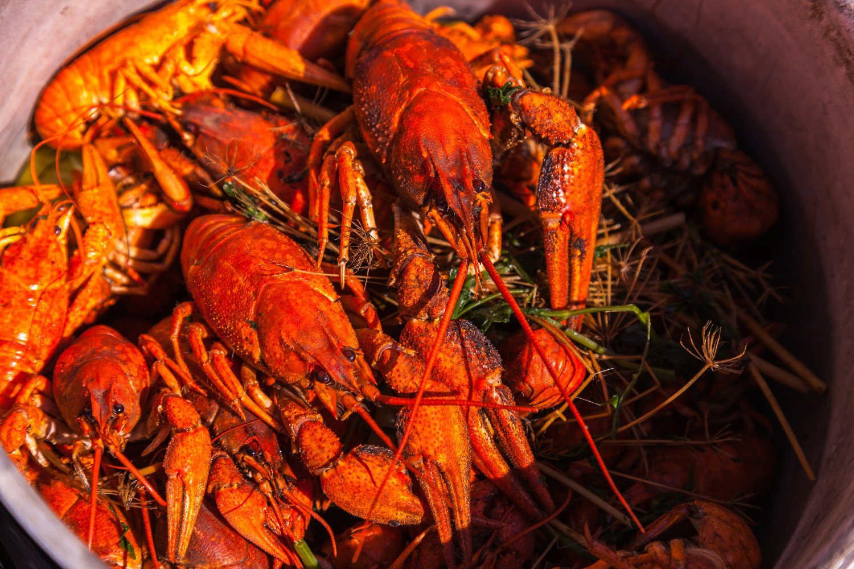 crayfish for beer, boiled crustaceans, crayfish, beer snacks, gourmet food