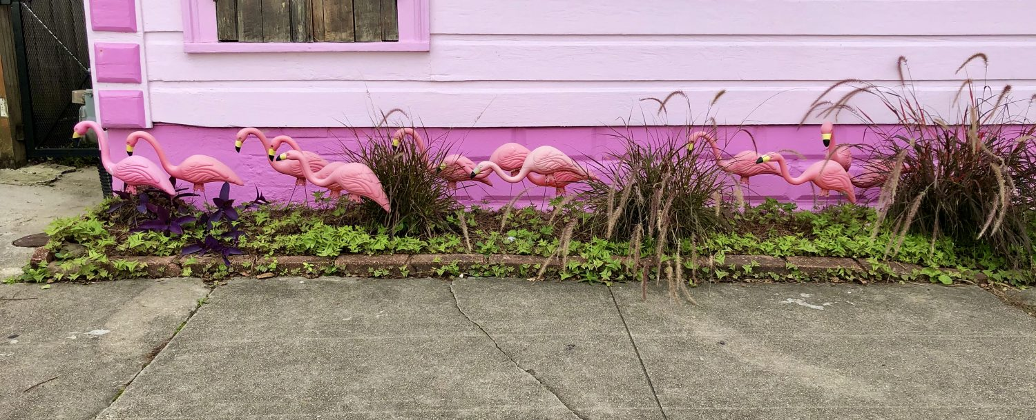 Flamingos in New Orleans