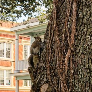 Squirrel in a New Orleans tree